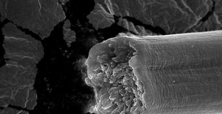 Microbially Produced Fiber 2