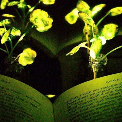 Engineers Create Plants That Glow 777x437 1